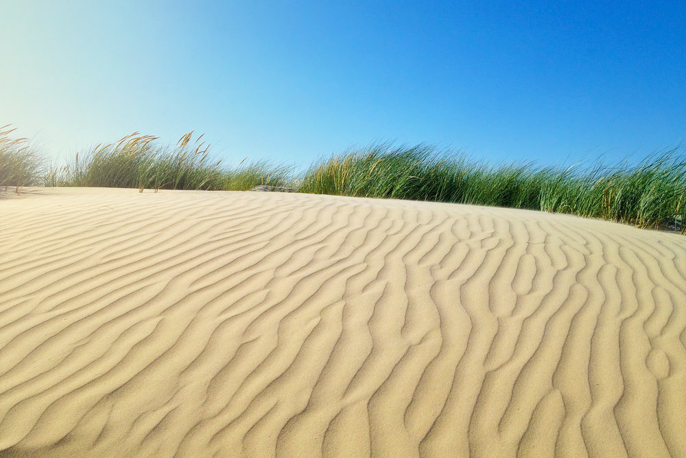 Sand Dunes, West Wittering, West Sussex