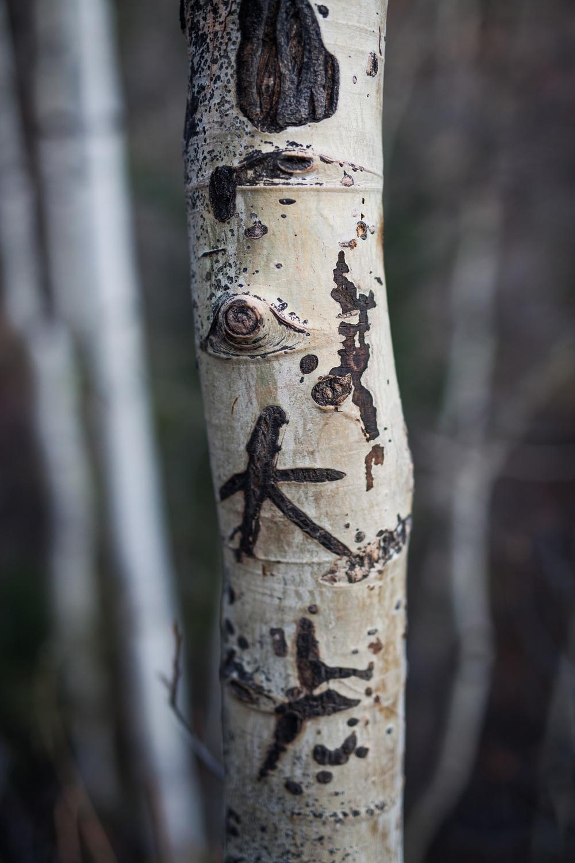 Telluride Aspen | Telluride Family Photographer