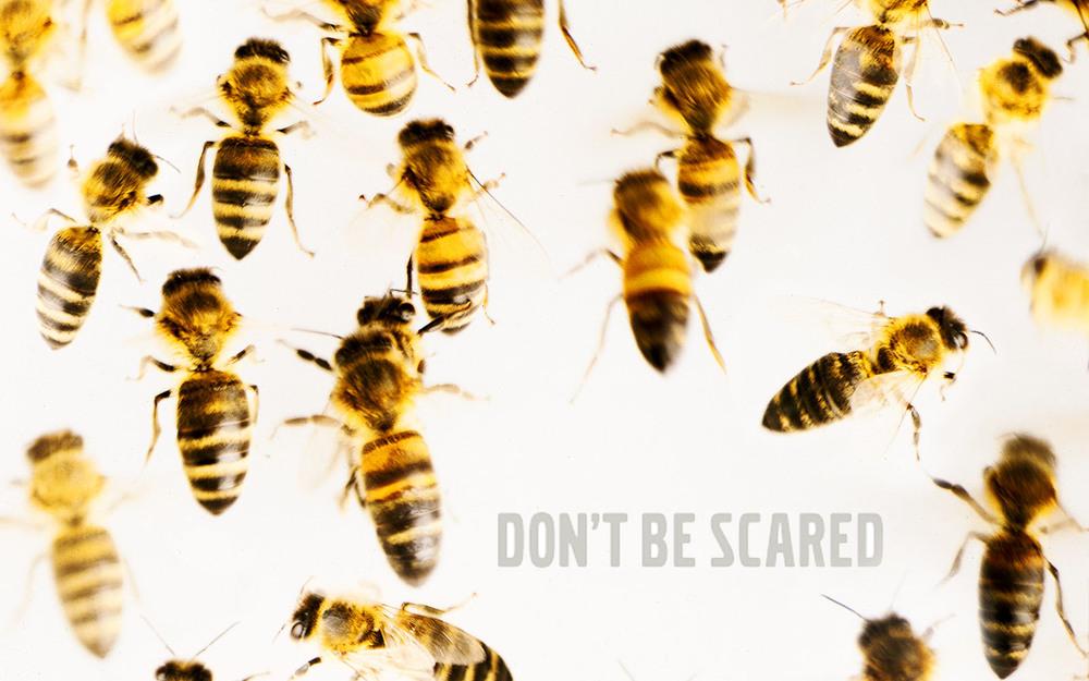 01_volvo-bees.jpg