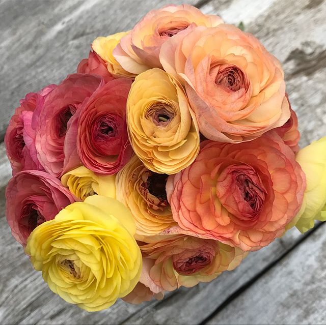 Ranunculus is such a treat!