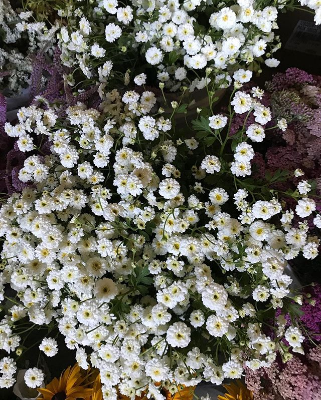 This feverfew is definitely on the 'must grow' list.