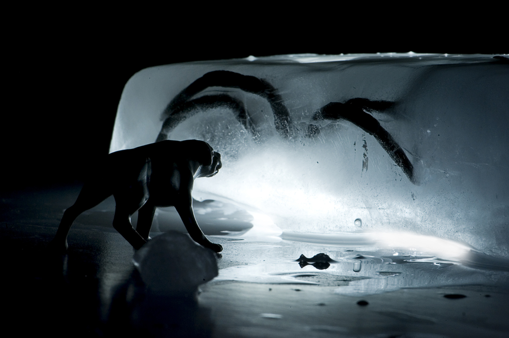 Macro ice221.jpg