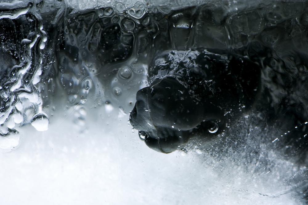 Macro ice275.jpg