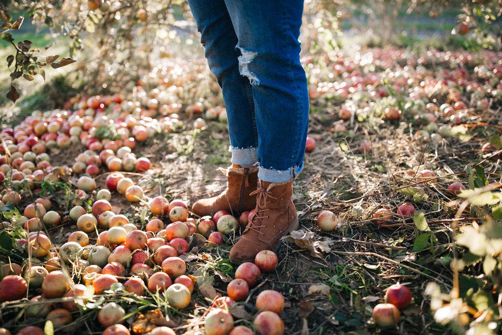 Aamodts apple orchard stillwater mn senior portraits