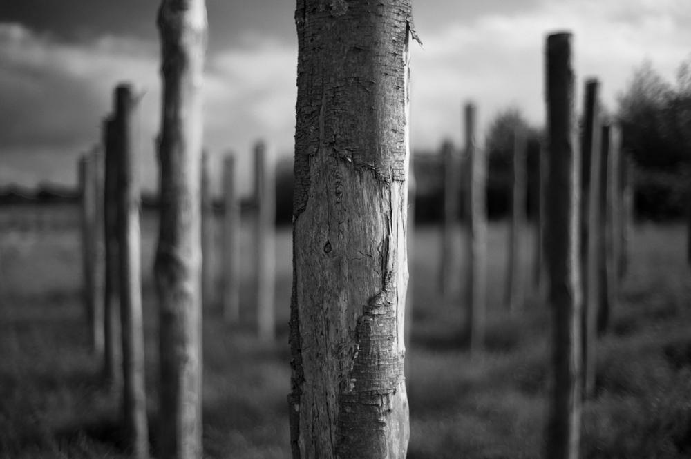 Standing Stumps 14141826947.jpg