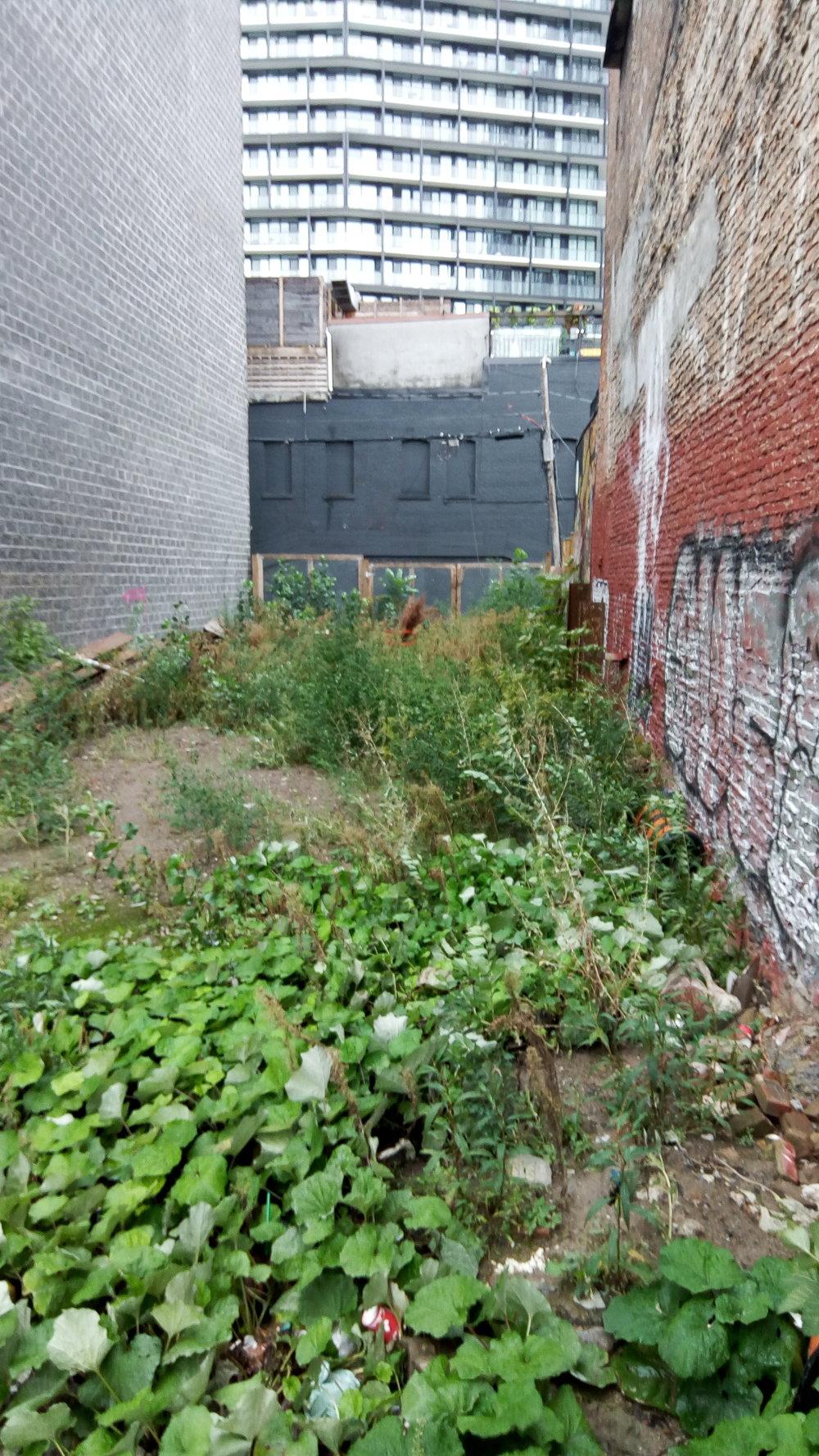 Fallow lot on Queen Street West