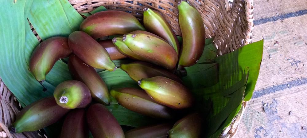 Red-Banana.png