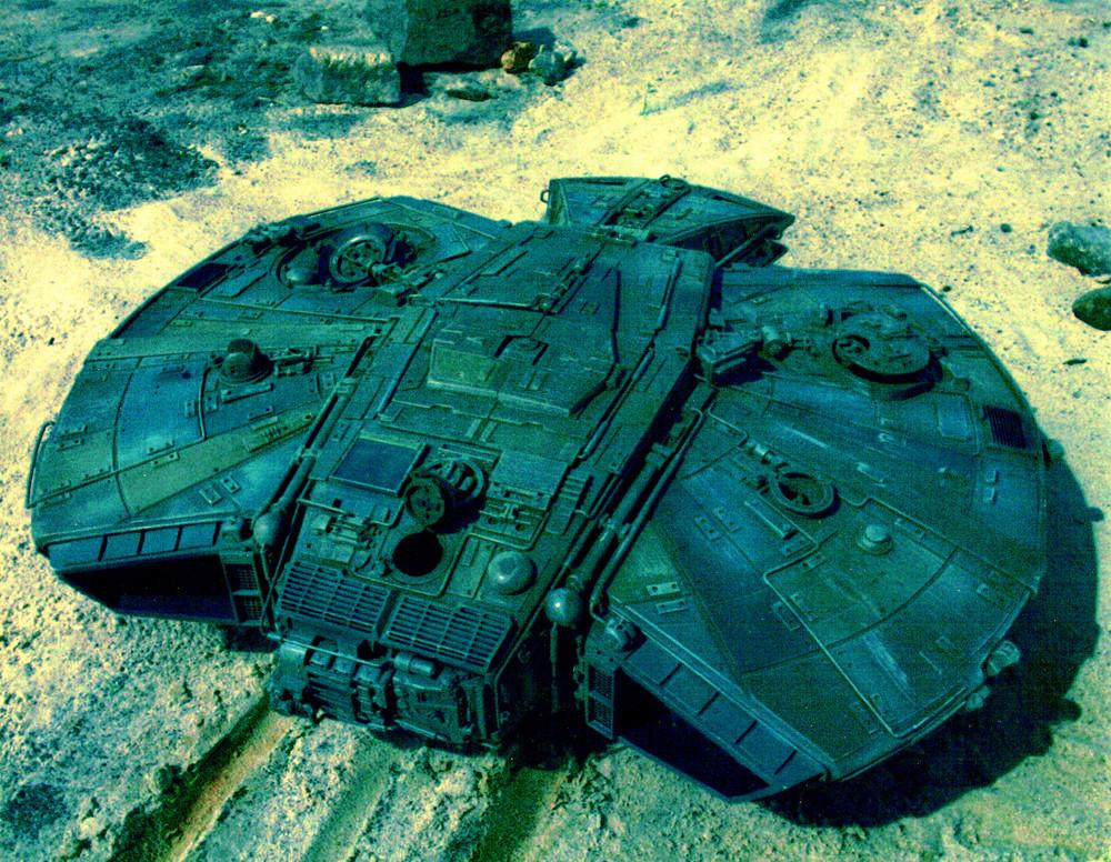 turtle (2).jpg