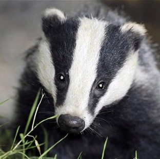 Badgers and newts aren't keen on concrete
