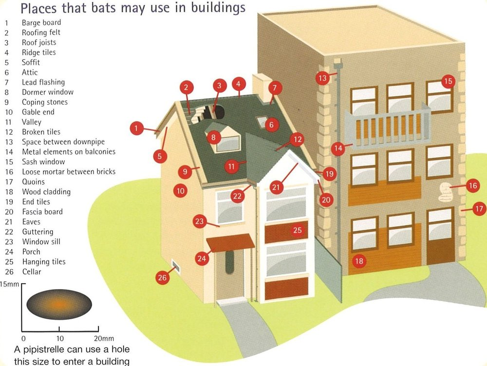 Places where you might find bats - www.bats.org.uk