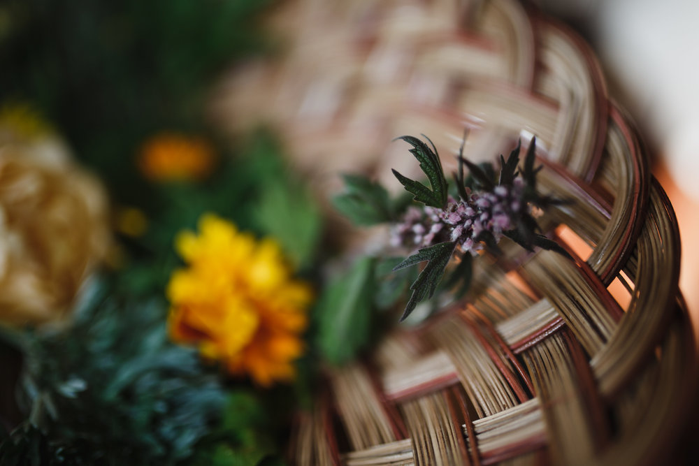 Motherwort Leonarus cardiaca herbal medicine