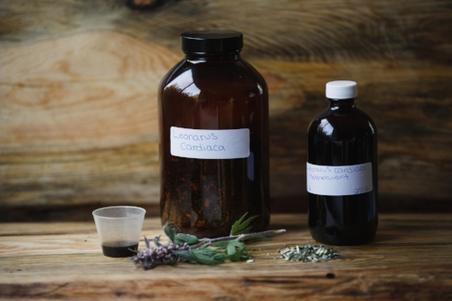tincture of mother wort herbal medicine victoria