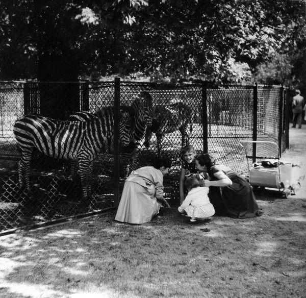 f1fa9ef0f0852d5c091a5f7b314f9f7d--artis-zoos.jpg