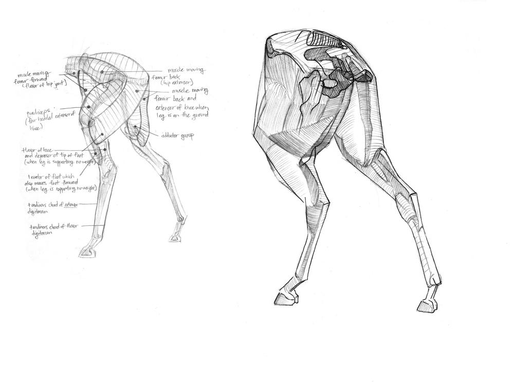 Contemporary Gottfried Bammes Anatomy Sketch - Anatomy And ...