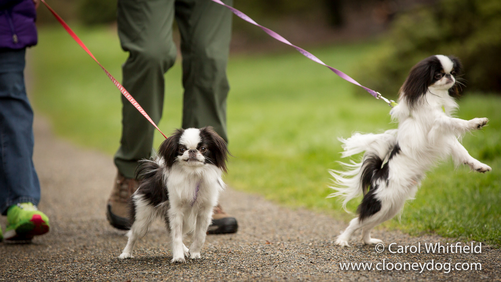 Session Spotlight_Japanese Chin