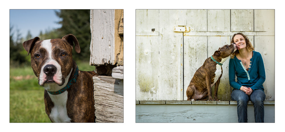 Pitbull_Seattle Pet Photographer.jpg