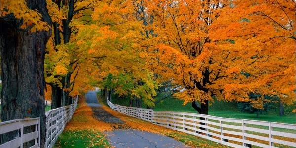 autumn-e1443275858892.jpg