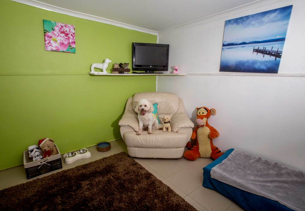 Pet Photography Brisbane