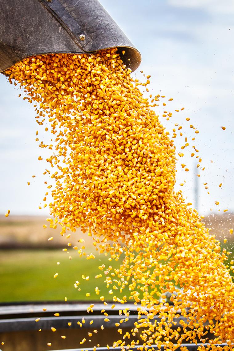 corn-harvest-stockholm-wisconsin-3592-apf.jpg