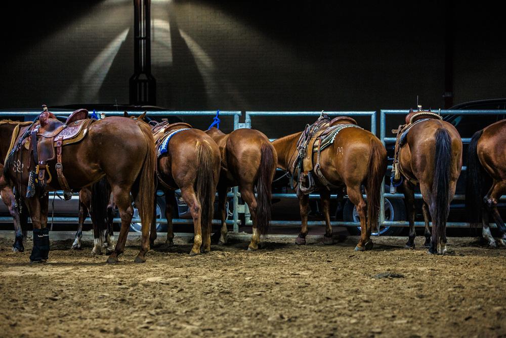 Horses-Fort-Worth-Stockyards-Rodeo-8026apf.jpg