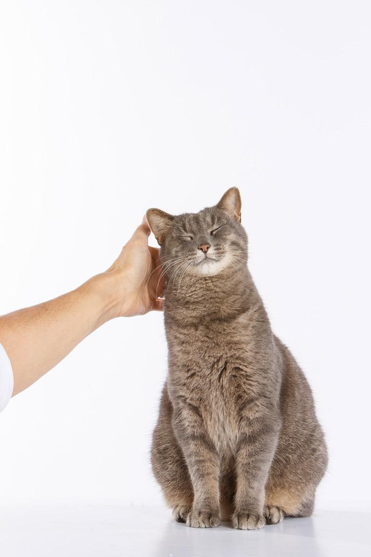 Louisa-Gray-Cat-13437-apf.jpg