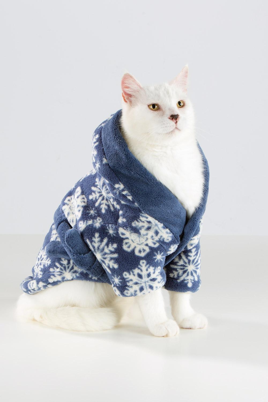cat-in-bathrobe-Glacier-0087-sp.jpg