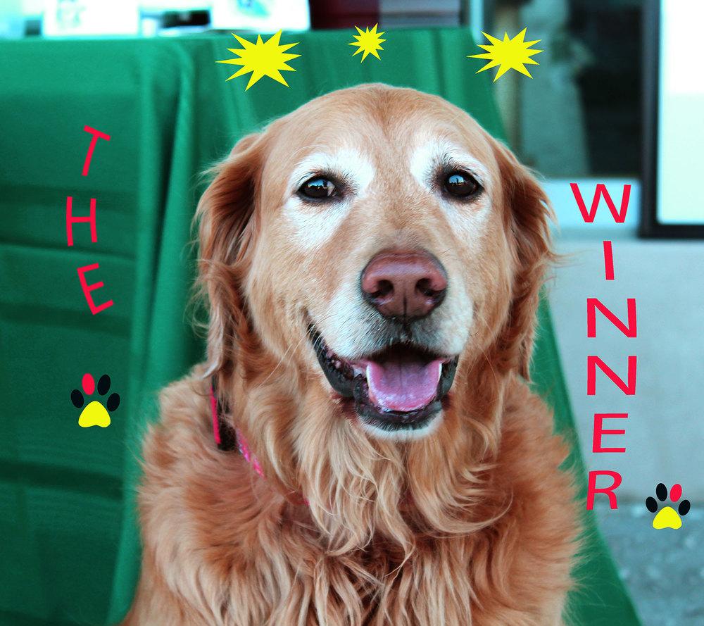Sundae the lucky Winner of a free Pet Portrait