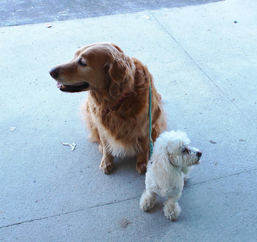 Sundae and Roxy
