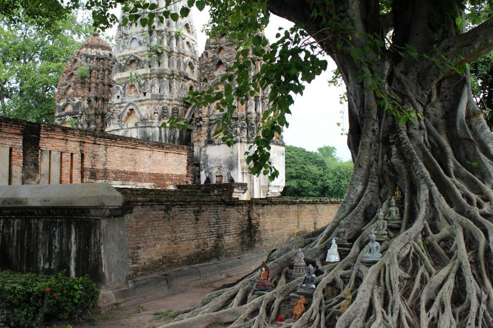 I loved this tree with Buddha statues near Wat Si Sawai.