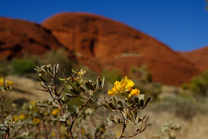 Uluru-6870.jpg