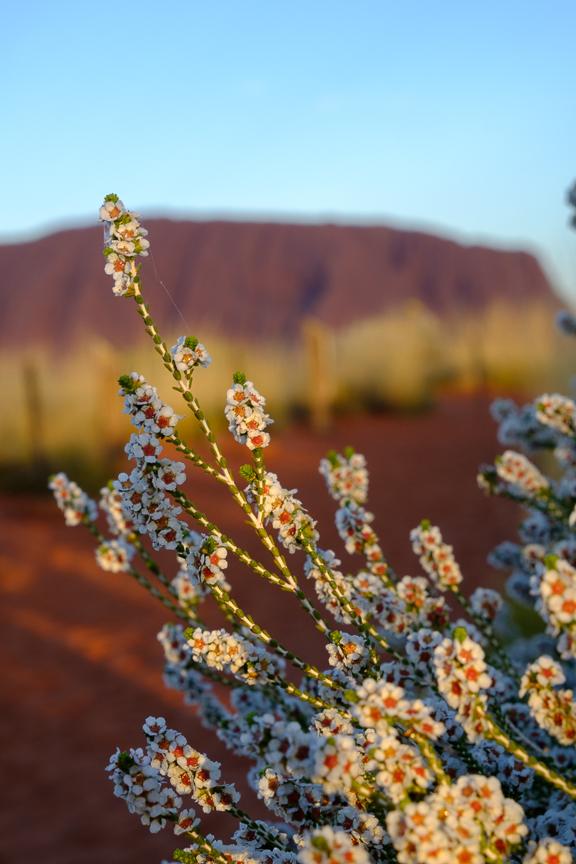 Uluru-6977.jpg