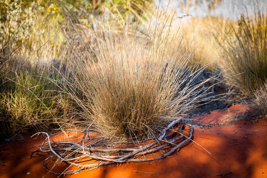 Uluru-9510.jpg