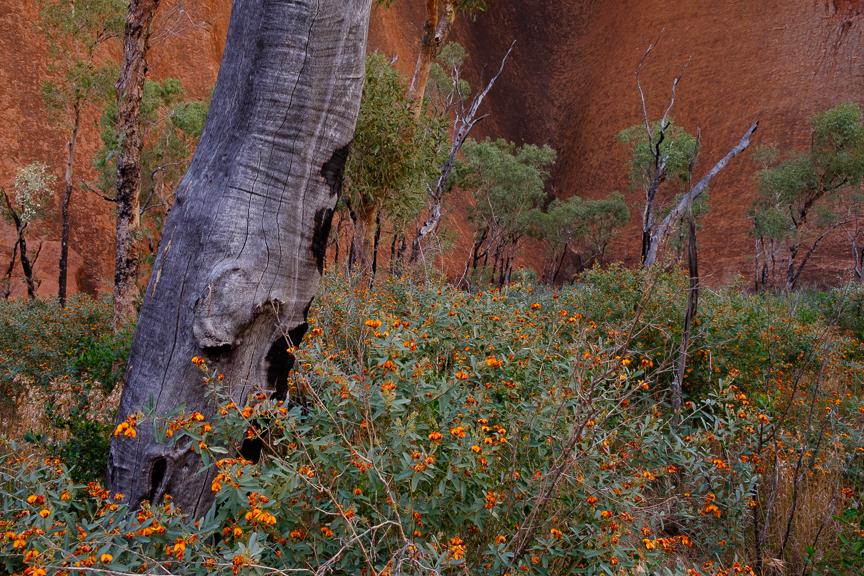 Uluru-7304.jpg