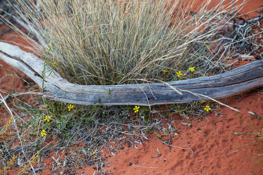 Uluru-9795.jpg