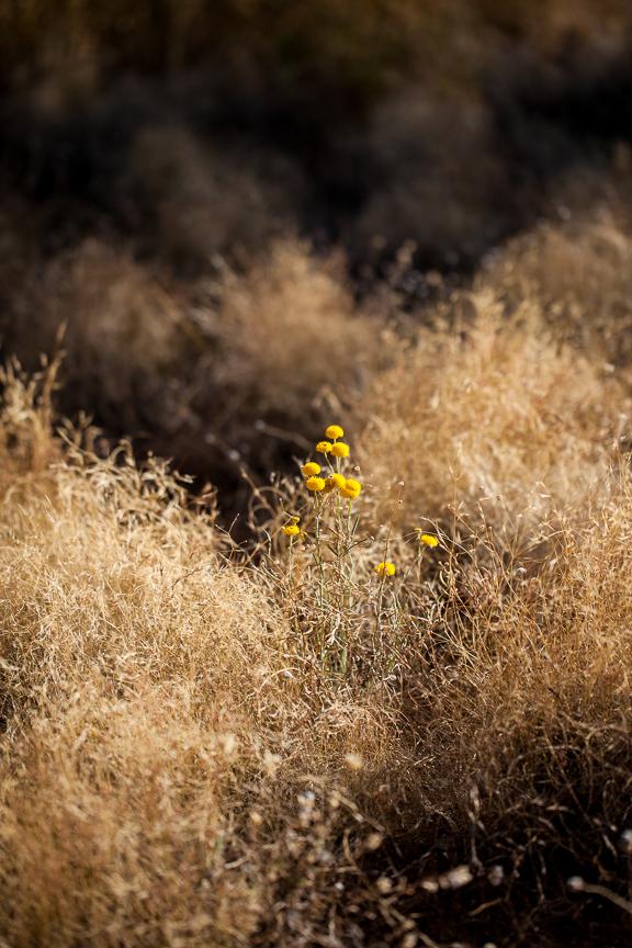Uluru-9871.jpg