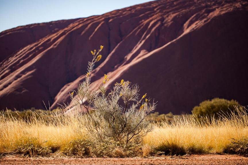 Uluru-9925.jpg