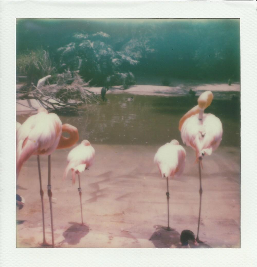 San Diego Zoo Shooting Suzie Photography