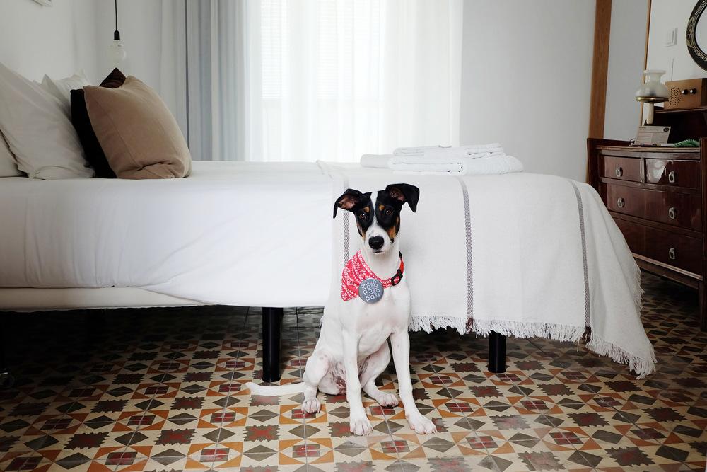 Hotel-Casa-de-Huespedes-Santa-Maria-petfriendly-Berta-2.jpg