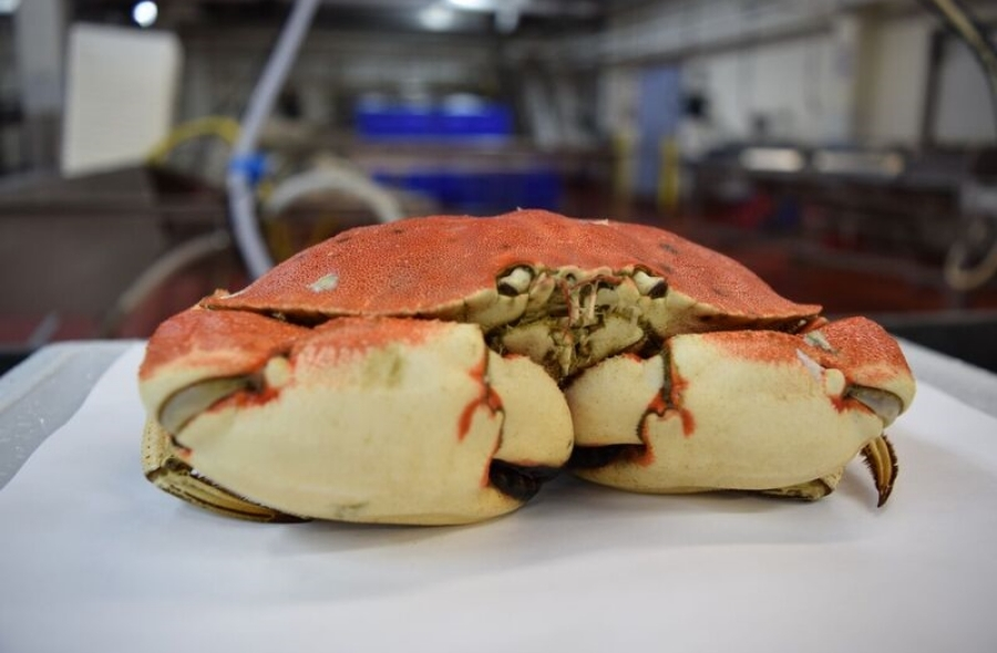 Whole Cooked Crab - 1.jpg