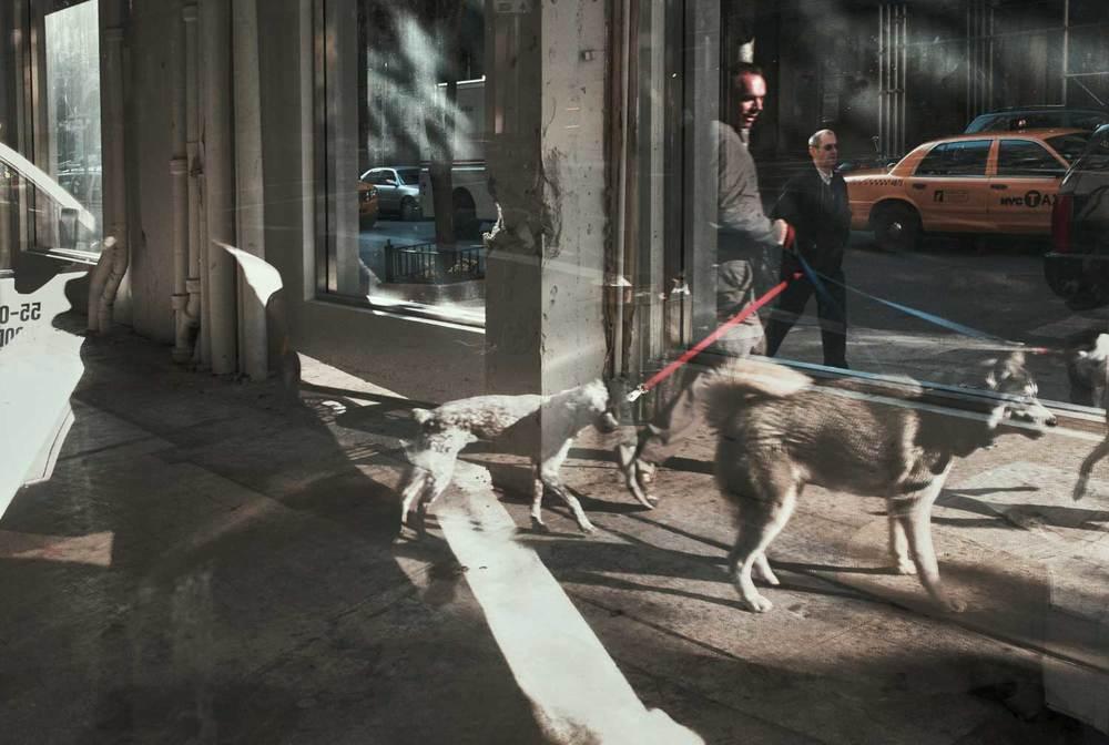AK--Dogs-01.jpg