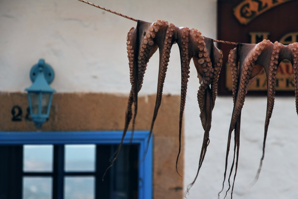 Octopus hang out to dry at Pantheon