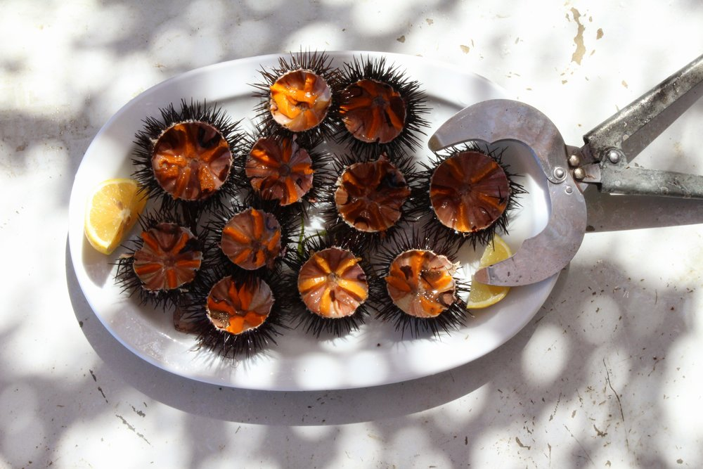 Sea urchins served fresh off the sea at Spilia restaurant
