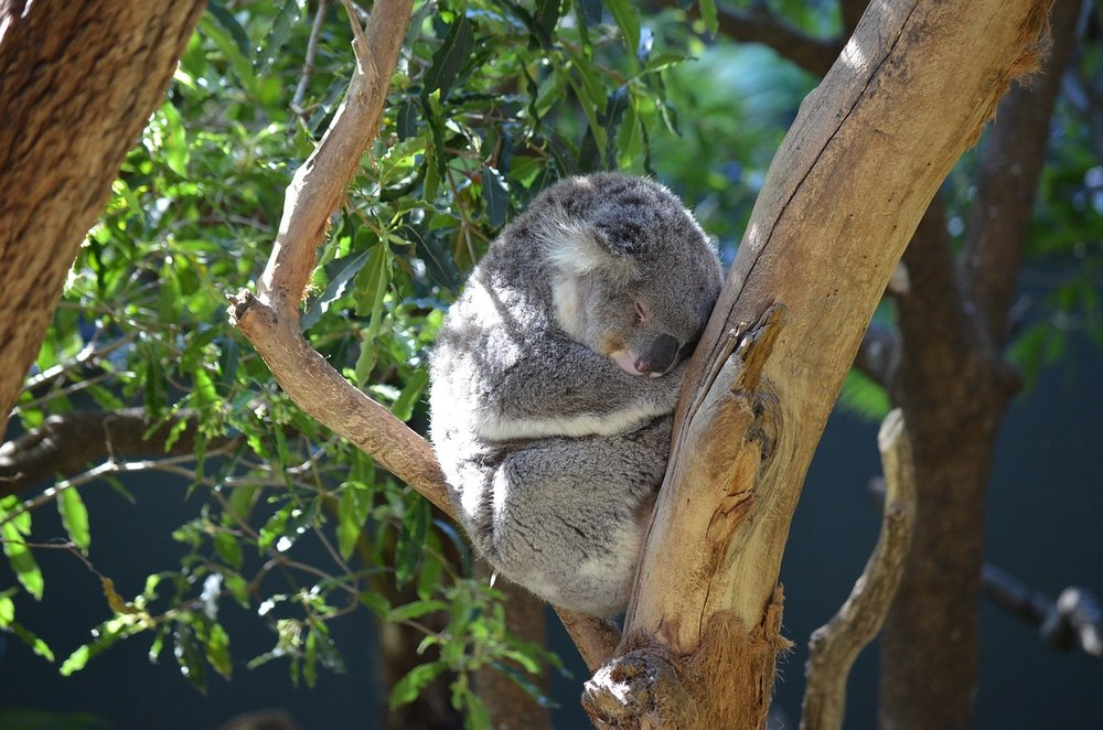 Taronga, Image by Stevie
