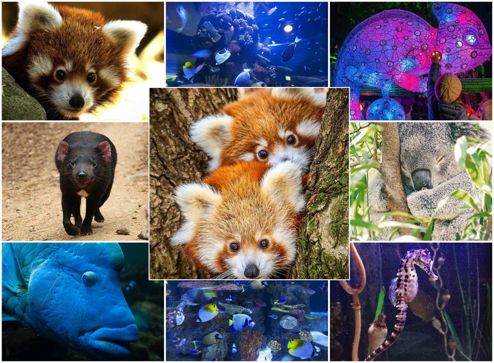 Images by nationalzoo, Source:  https://www.instagram.com/nationalzoo/