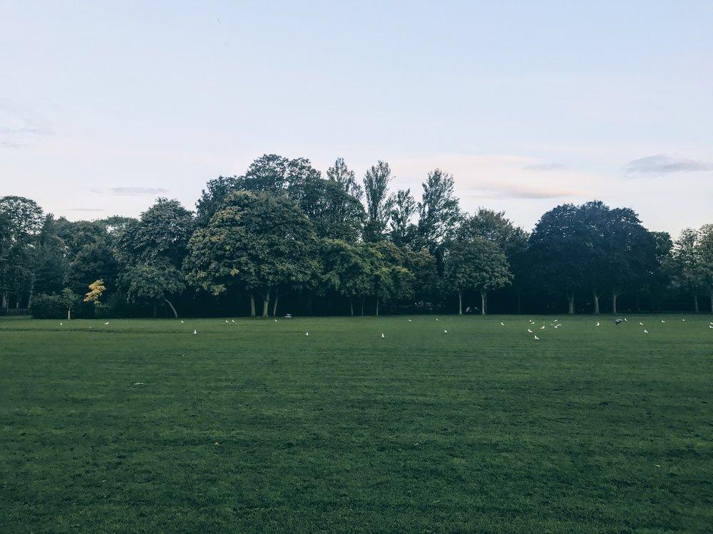 Herbert Park at Ballsbridge