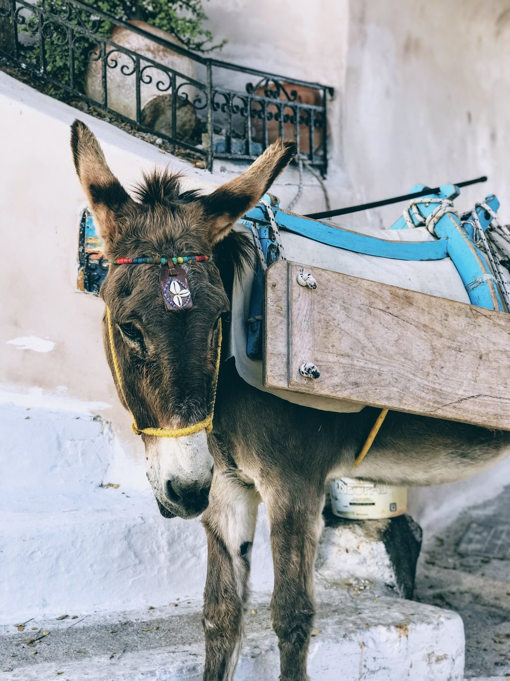 Donkey in the village of Pyrgos