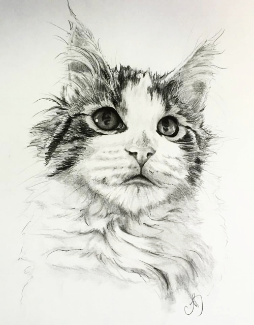 Jax  Graphite on Smooth Bristol