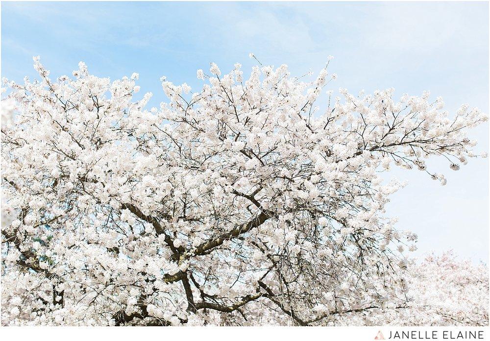 sping-blossoms-seattle photographer janelle elaine-5.jpg