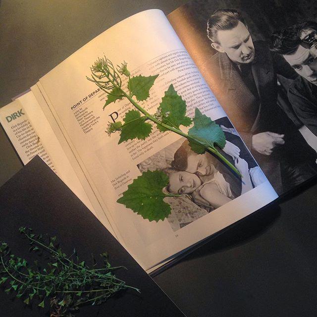 It's time for a #herbarium - #wildherbs #shepherdspurse #garlicmustard #jackofthehedge #dirkbogarde