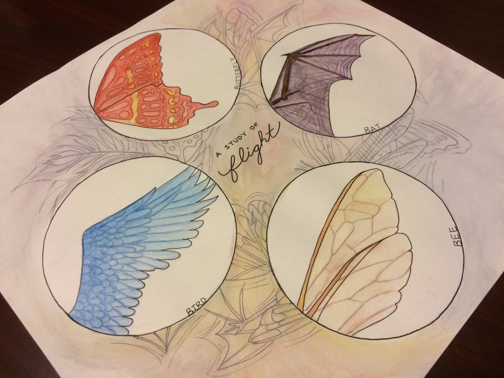 A Study of Flight: Watercolor & Ink